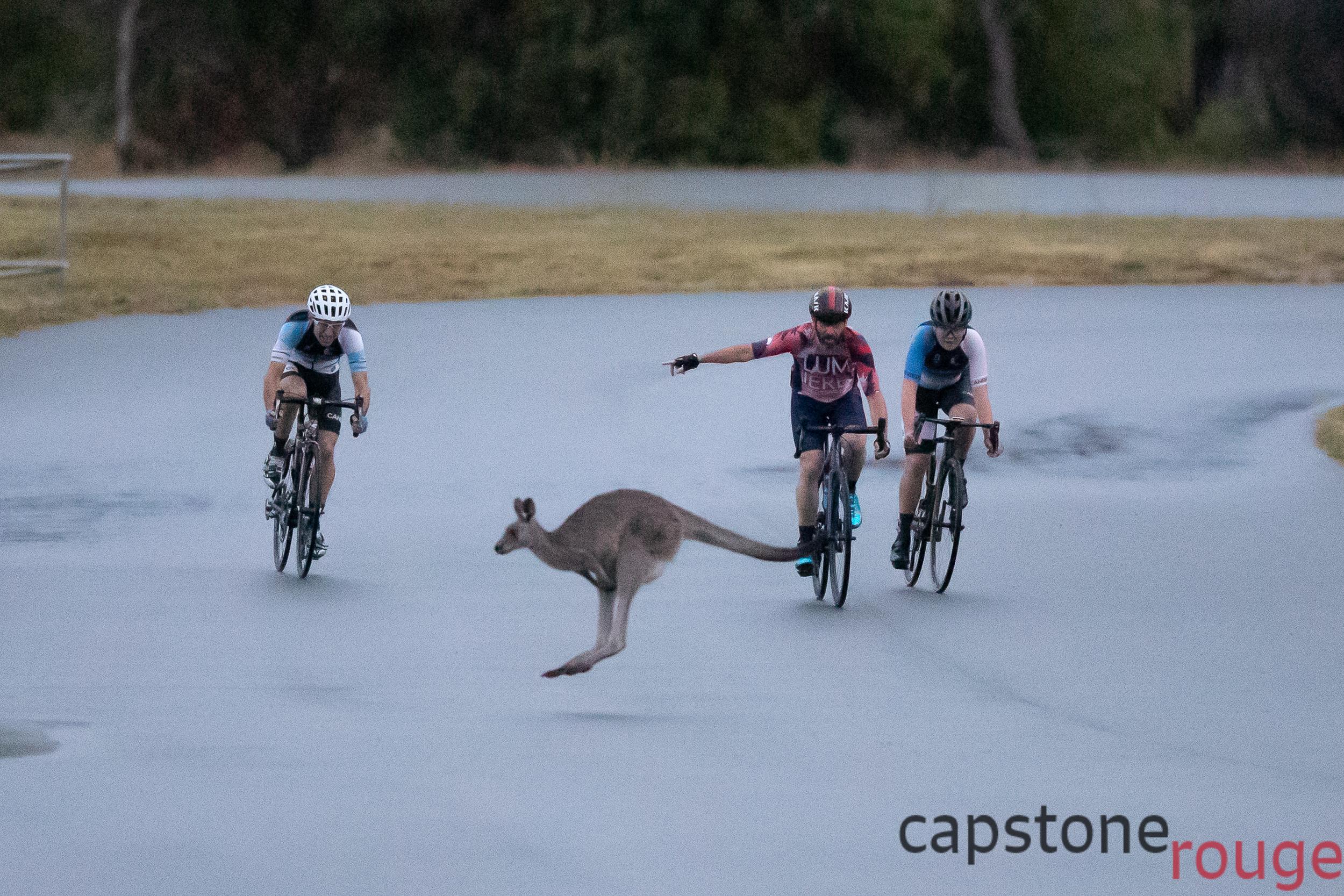 Roo crossing Stromlo Crit Track